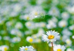 早晨让人开心的暖心话